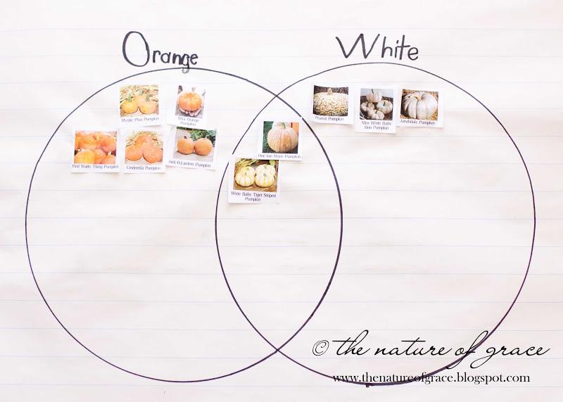 The Nature Of Grace  Lesson Theme  Pumpkins