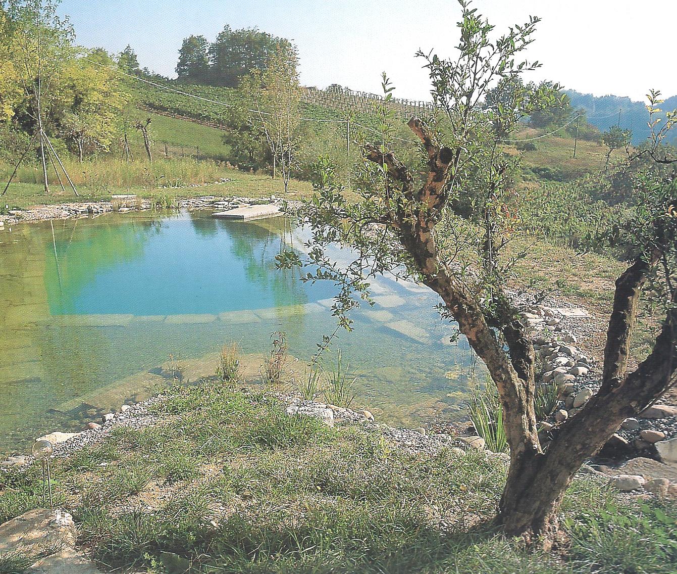 Ancora sulla bio piscina sostenibile for Bio piscina