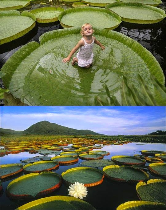 Bucket List Sit In A Giant Lily Pad On The Amazon River