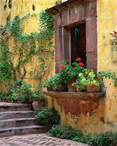 Hydrangea Hill Cottage: windowboxes