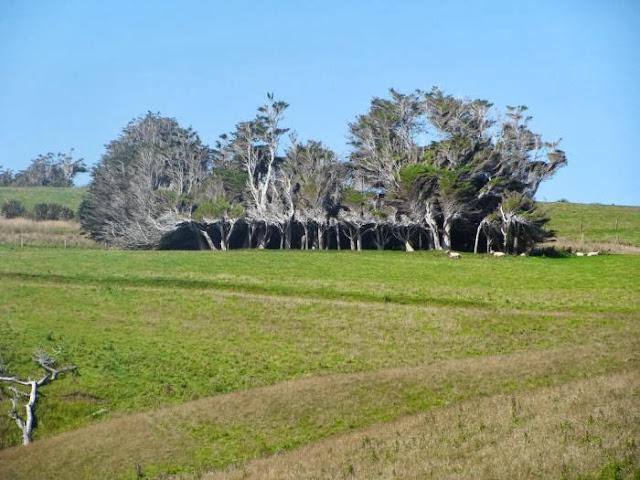 Деревья и ветер