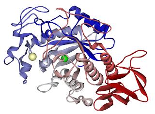 Skinny Fiber Enzymes: Amylase, Lipase, Glucomamylase, Protease, Papain, Bromelain, Cellulase. How digestive enzymes work!