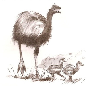 Emu with young chicks