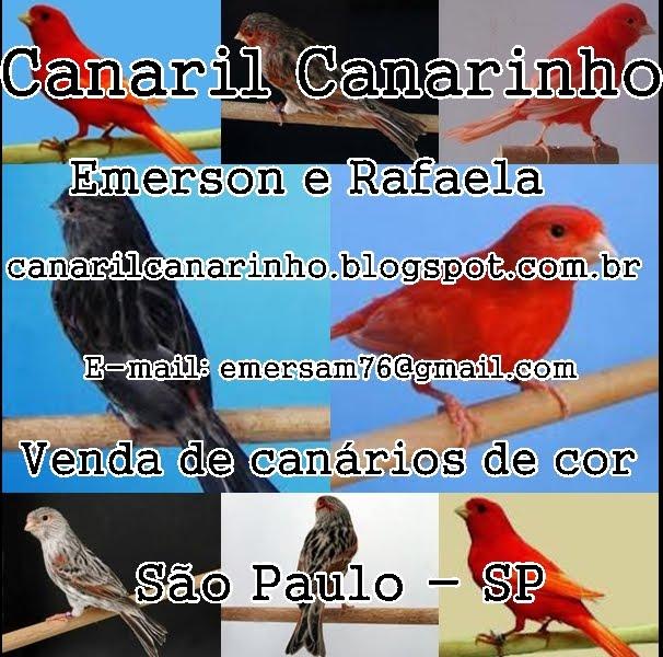 Canaril Canarinho