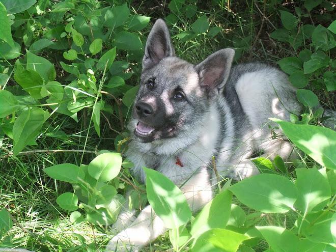 Maya 1,5 år