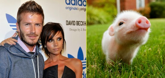 Top Celebrities with their Lovely Pets