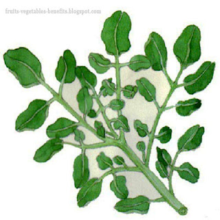 benefits_of_eating_watercress_fruits-vegetables-benefits.blogspot.com(14)