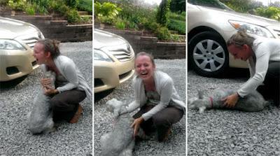 Momento em que cadela desmaia