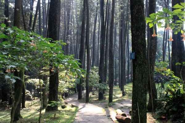 Taman Hutan Raya Djuanda Dago Pakar Bandung, hutan djunda bandung,hutan juanda bandung,wisata taman hutan juanda bandung,hutan kota juanda bandung,hutan kota juanda di bandung