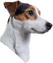 CURATOR: JACK RUSSELL