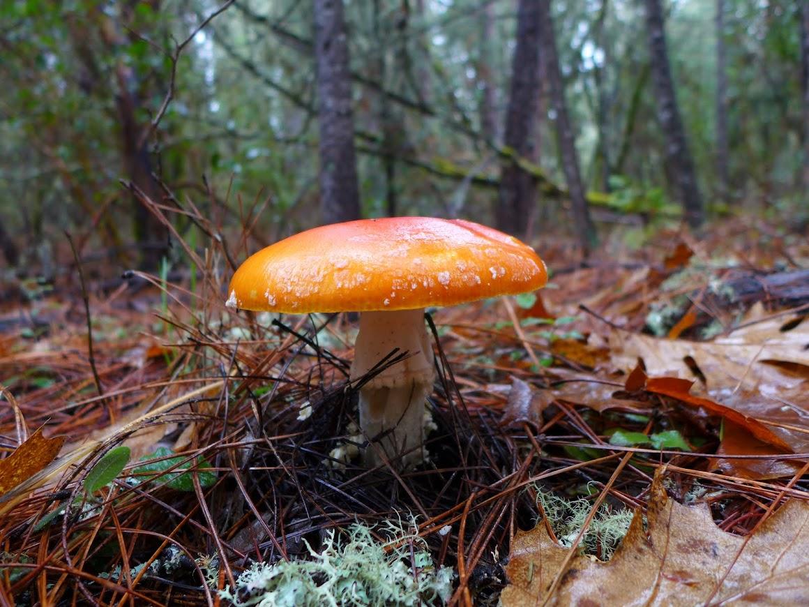 Colorful mushroom at Cathedral Hills Park