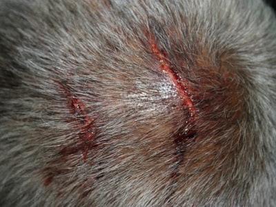 kepala terluka