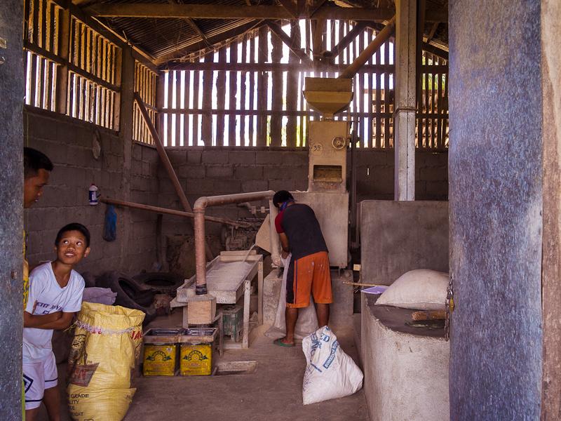 rice_farming