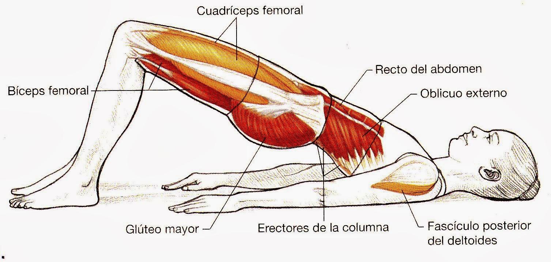 figura trabajan biceps femoral: