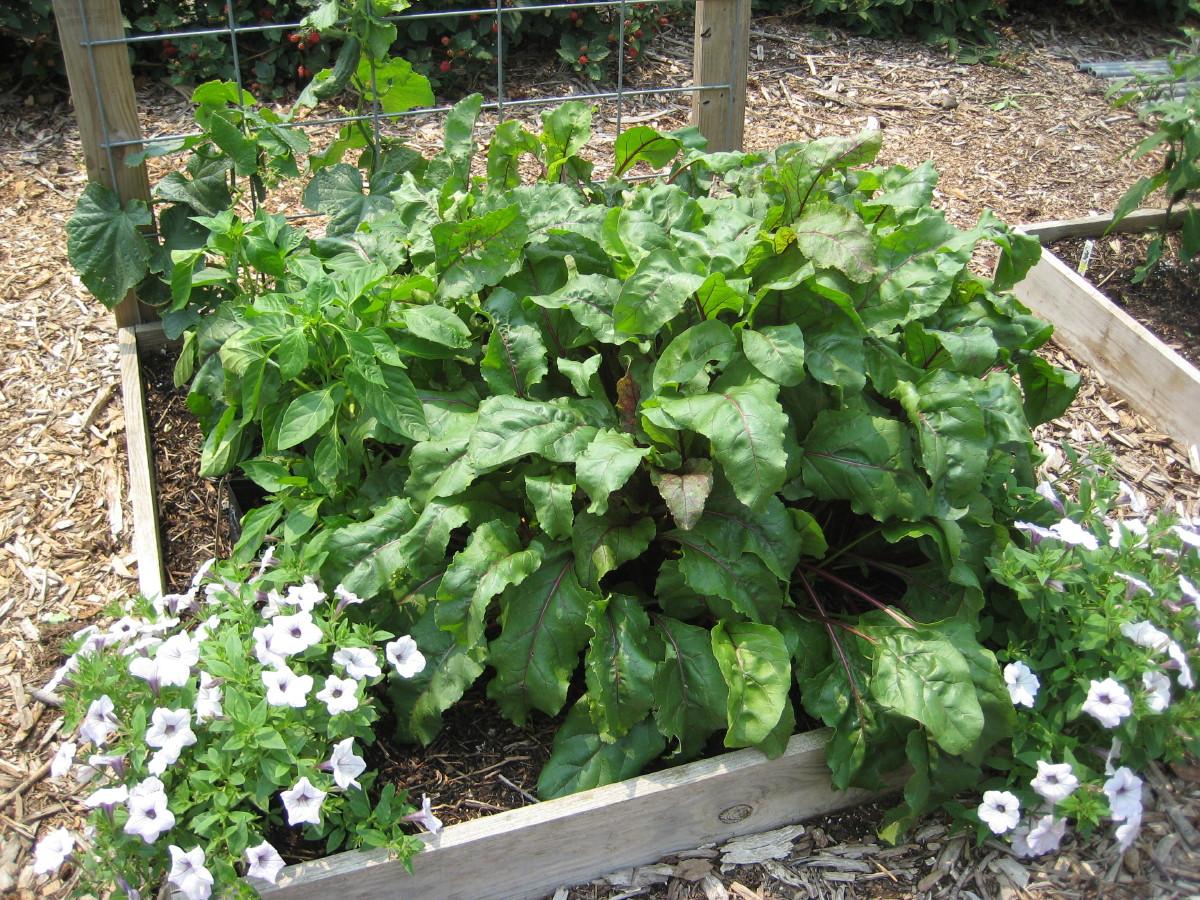 The gardens of edom easy vegetable gardening for Easy vegetable garden