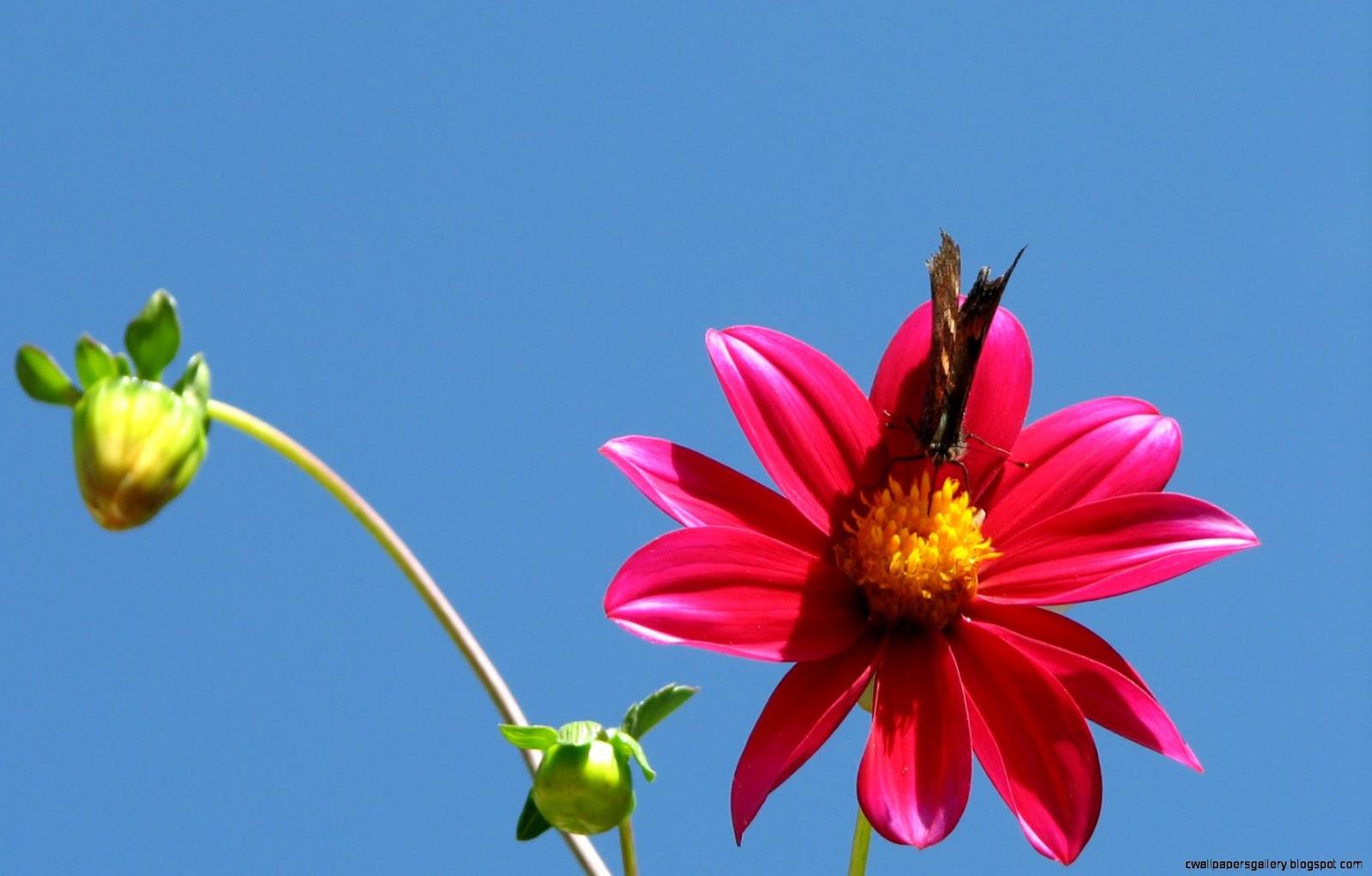 Beautiful Flowers Desktop