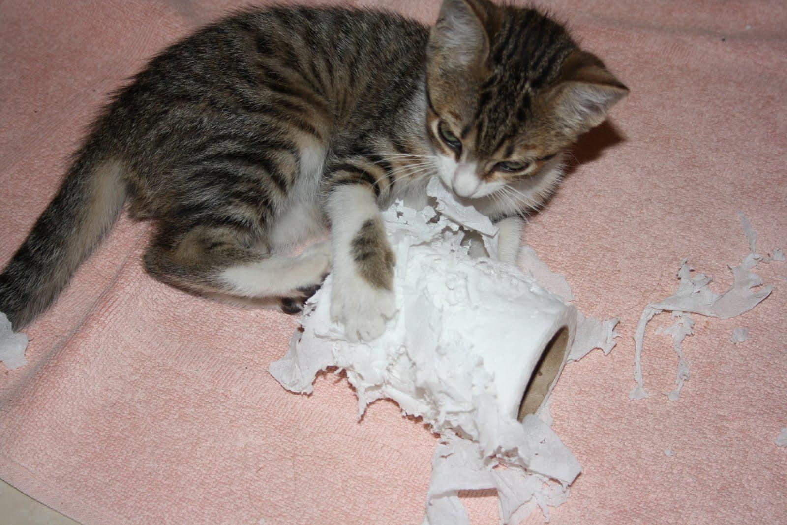 Gato mia: O brinquedo preferido da Filó #7D564E 1600 1067