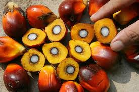 Agri Commodity Tips ,  Commodity free tips  , Commodity intraday tips , MCX Tips Services , MCX crude palm oil