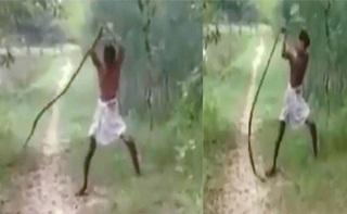 Balaskan Dendam Anaknya, Pria Ini Bunuh Ular King Cobra dengan Tangan Kosong