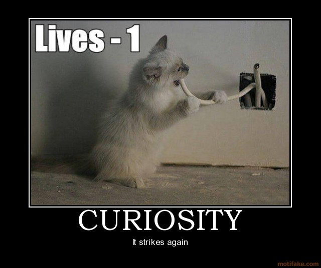 curiosity-curiosity-cat-demotivational-p