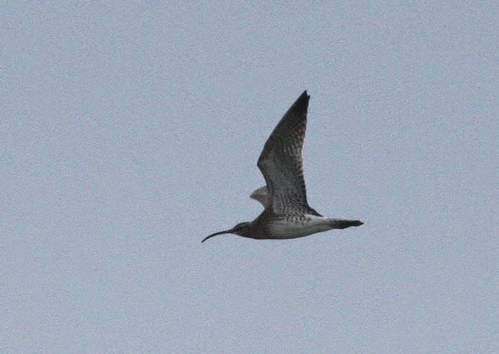 M Hogan Glamorgan 3 Valleys Birding: Rha...