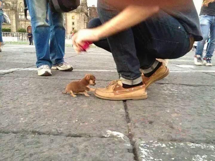 Imagen del perro más pequeño del mundo