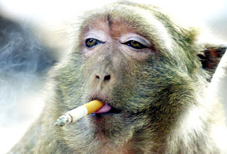 Manfaat merokok