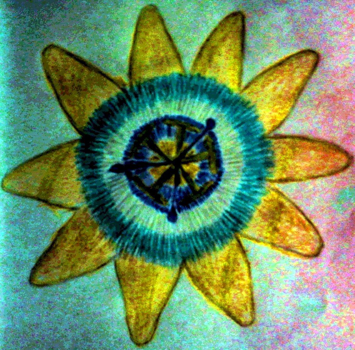 http://naturalezayculturaargentina.blogspot.com.ar/2011/11/mburucuya.html