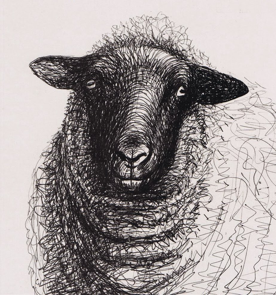 Gallery For gt Henry Moore Drawings Sheep