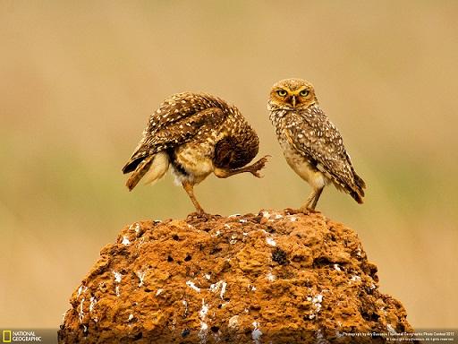 مجموعة من أجمل صور وخلفيات ناشونال جيوجرافيك National Geographic