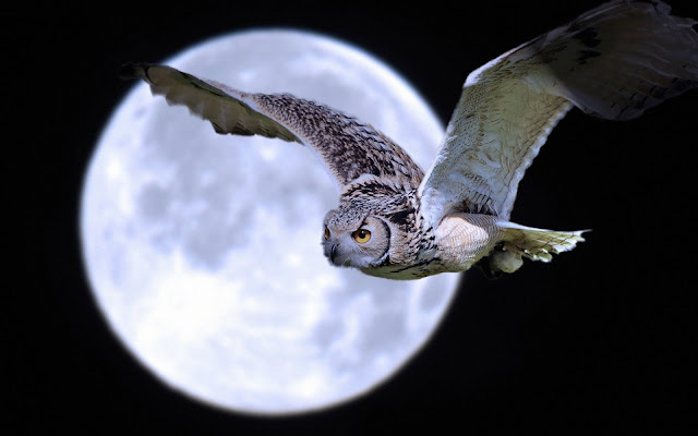 Búho Lechuza blanco bajo la luna llena imagenes de aves exoticas