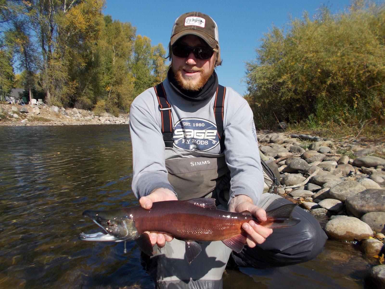 Addictive angling colorado kokanee salmon on the move out for Salmon fishing colorado