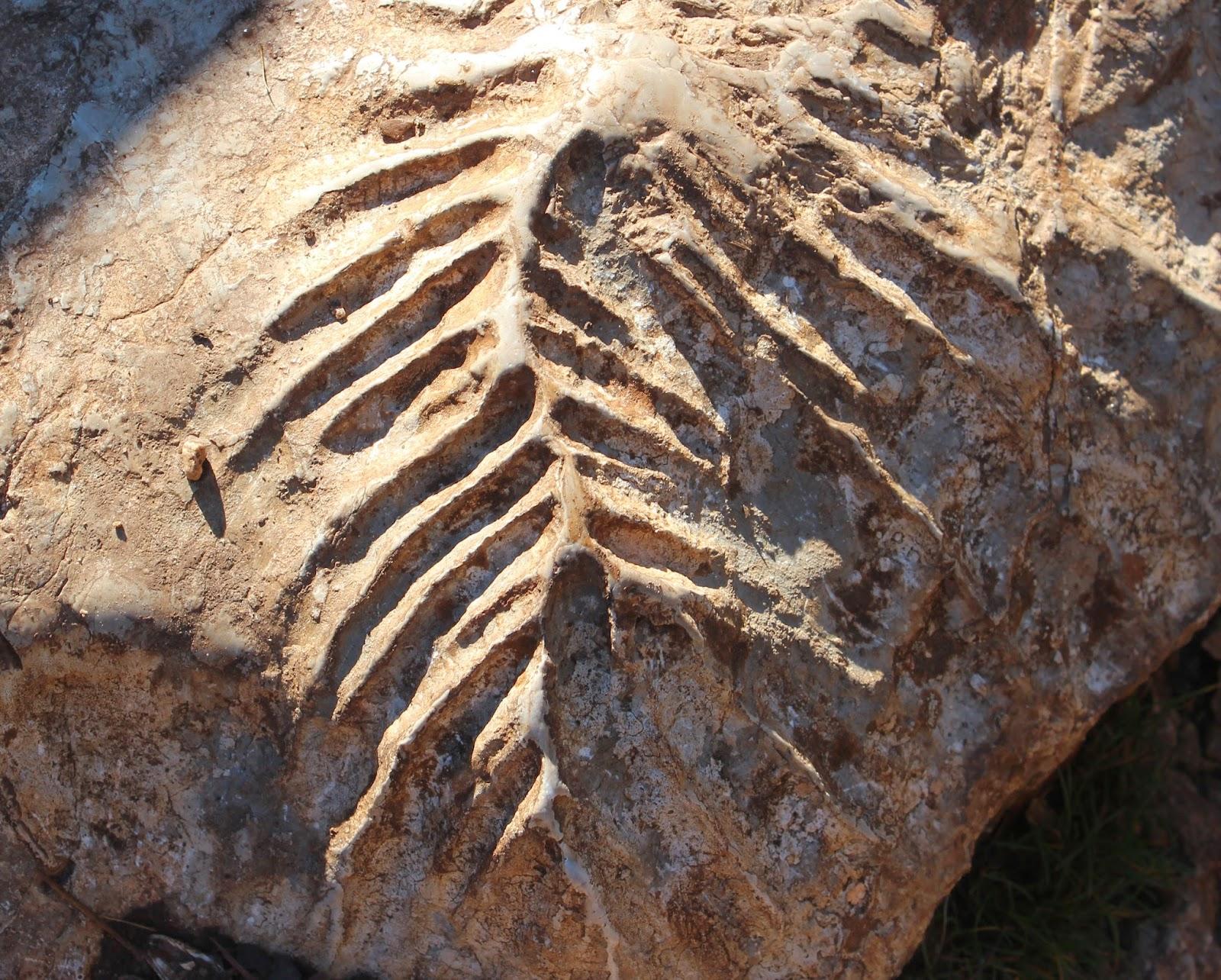 Fósiles marinos en la Sierra de Cazorla