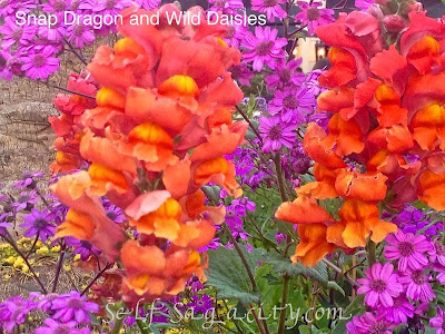 orange snap dragon purple diasy