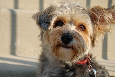 Adopt A Dog Montgomery County