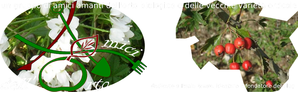amicidellortodue
