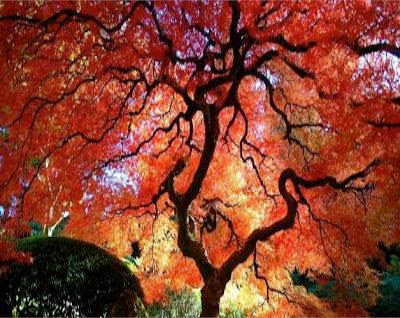 Sandonatopoli vivere con la natura l 39 acero for Acero rosso milano