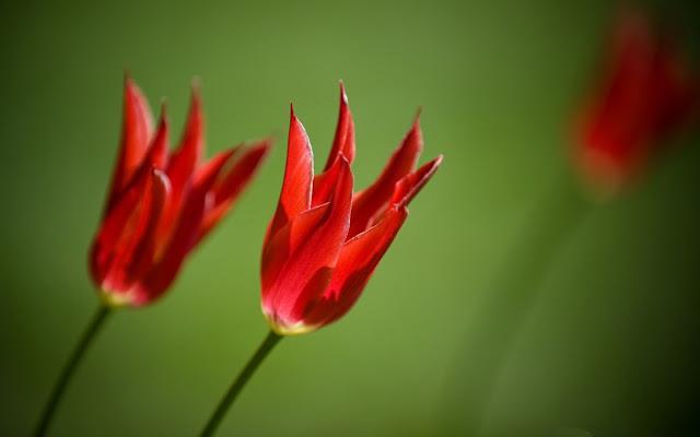 Hình nền mùa xuân đâm chồi nẩy lộc