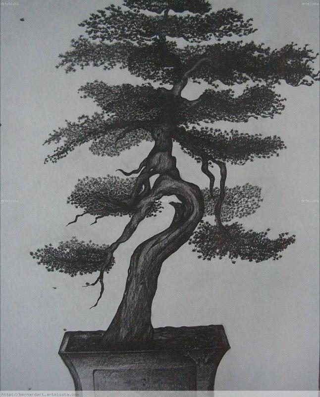 Mester de brever a jos mar a merino ecosistema - Como se cuida un bonsai ...