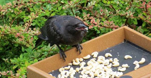 Budak Ini Sering Diberi Hadiah Oleh Burung