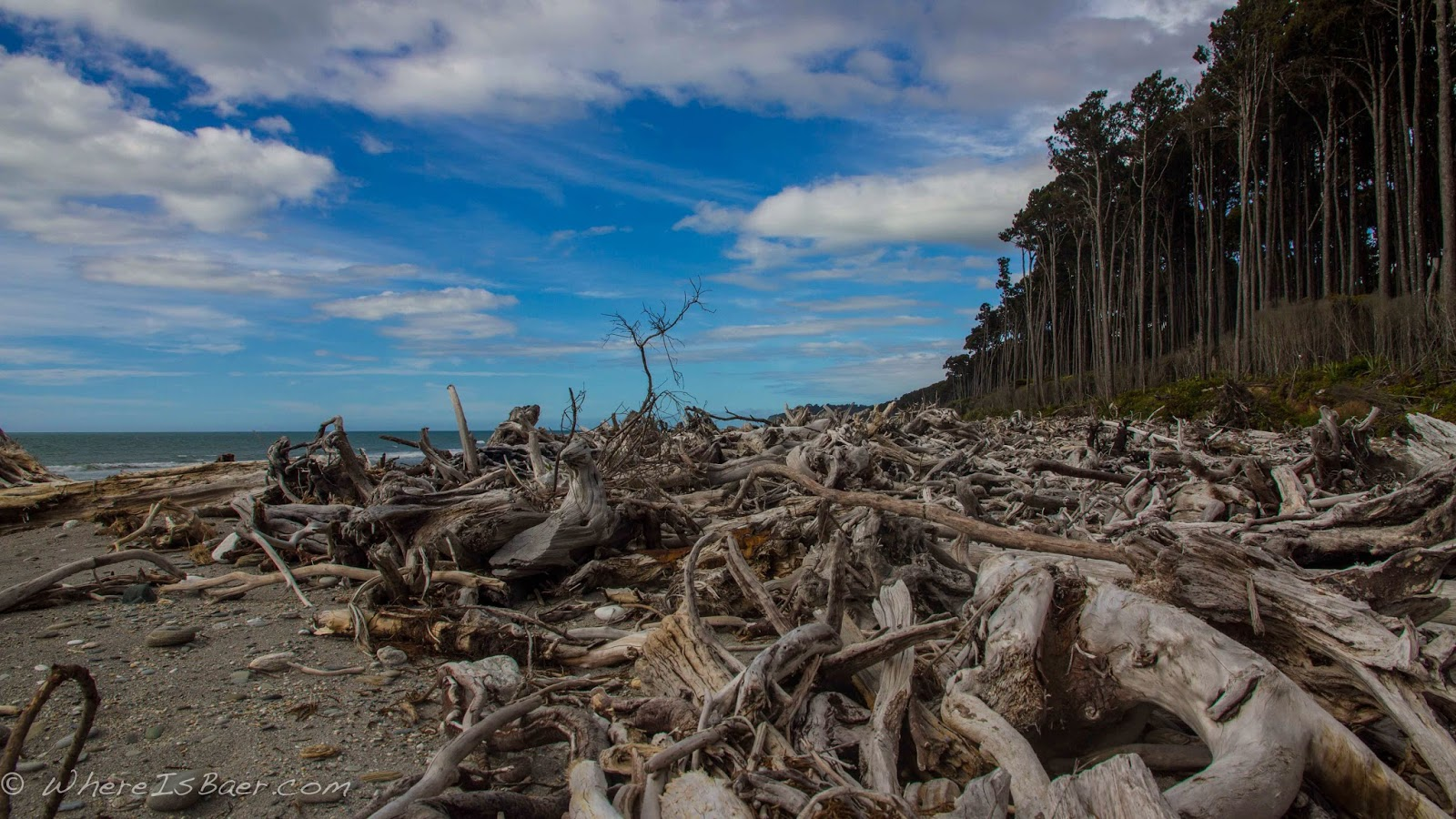 New Zealand beaches drift wood and a staggering forest , whereisbaer.com chris baer