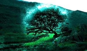 Kisah Nabi Muhammad, Seorang Baduwi dan Sebuah Pohon
