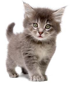 Cat name: Which name for my cat?, cat name, kittens in your life, cat care