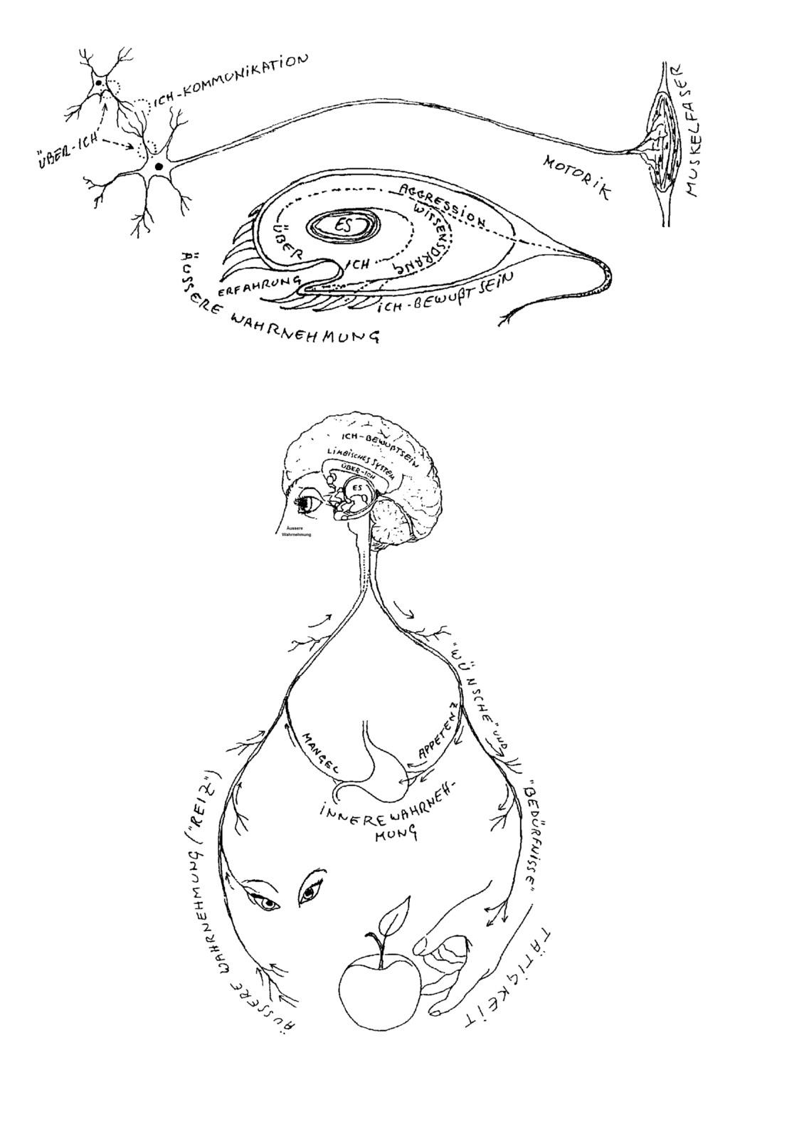 Die Neurologie der 3 Instanzen (eine Synthese)