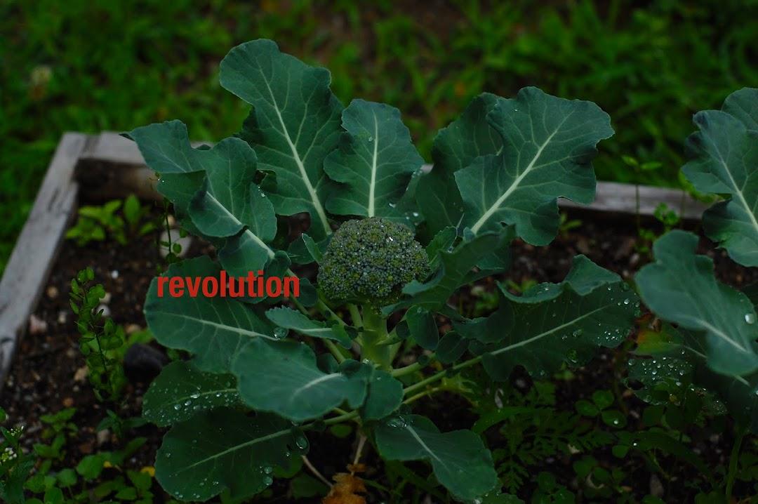 Ortolan Revolution