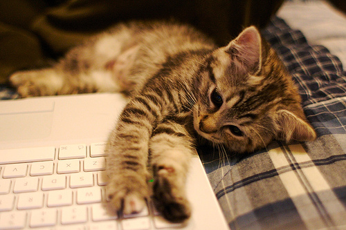 Aah ! Its Moring Let Me Check My Social Media - Cute Kitty