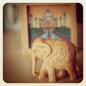 و الفيَلة ألطف منا نحن البشر أحياناً كثيرة