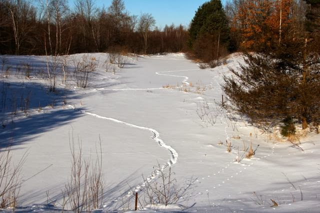 pond covered with ice covered with snowcovered with tracks