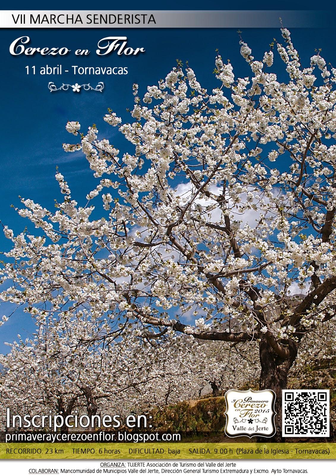 VII Marcha Senderista del Cerezo en Flor