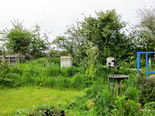 bee hives, long grass, natural habitat